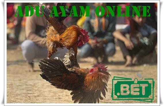 Adu Ayam Online Dan Tips Menang Mudah